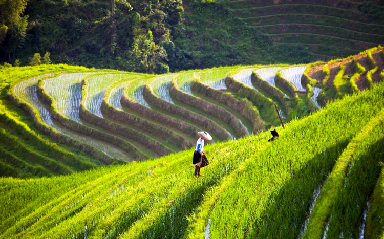 Longji terrace field